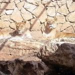Хайфский зоопарк